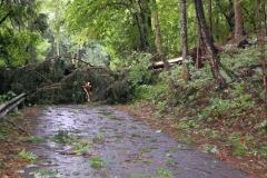 Sturmschaden August 2017